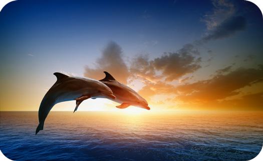 DolphinMeaningDolphinSymbolism2